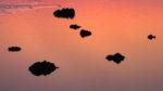 DE, DE-SH, NF, SH, amber, aprikot, color, colors, deutschland, ebbe, farbe, farben, foreshore, frühling, germany, gröde, hallig, hallig gröde, halligen, holm, jahreszeit, jahreszeiten, lila, low tide, meer, mudflat, niedrigwasser, nordfriesland, nordsee, north frisia, north sea, purple, reflections, reflektionen, reise, schleswig-holstein, sea, seascape, season, seasons, see, spring, tidal flat, travel, violett, wadden, wasser, water, watt, world