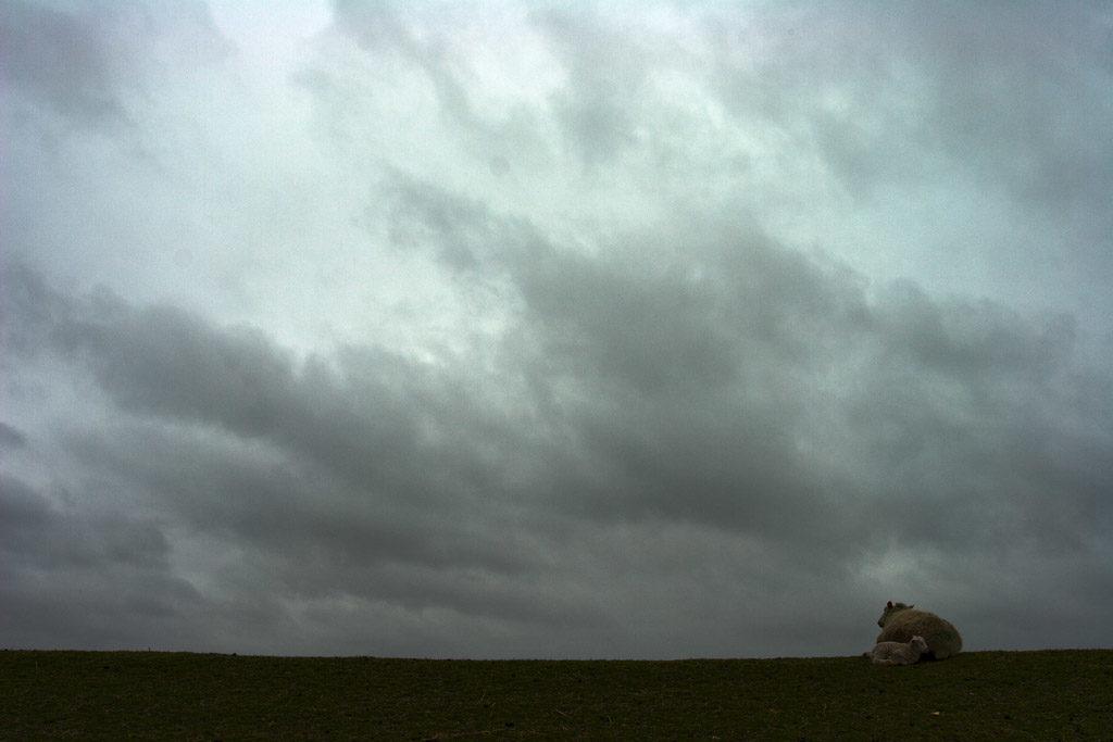 DE, DE-SH, NF, SH, animal, animals, clouds, deich, deutschland, dike, dyke, foreshore, frühling, germany, groede2007, gröde, hallig, hallig gröde, halligen, himmel, holm, jahreszeit, jahreszeiten, knudswarft, lamb, lambs, lamm, lämmer, meer, nordfriesland, nordsee, north frisia, north sea, reise, ringdeich, schaf, schafe, schleswig-holstein, sea, seascape, season, seasons, see, sheep, sky, spring, tier, tiere, travel, wadden, wasser, water, watt, wolken, world