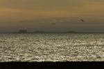 DE, DE-SH, NF, SH, animal, animals, bird, birds, deutschland, foreshore, frühling, germany, groede2007, gröde, hallig, hallig gröde, hallig langeneß, halligen, himmel, holm, jahreszeit, jahreszeiten, langeneß, meer, nordfriesland, nordsee, north frisia, north sea, reflections, reflektionen, reise, schleswig-holstein, sea, seascape, season, seasons, see, sky, spring, tier, tiere, travel, vogel, vögel, wadden, wasser, water, watt, world