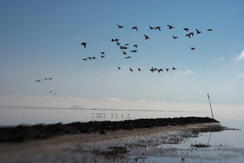 DE, DE-SH, NF, SH, animal, animals, bird, birds, blau, blue, brent geese, brent goose, color, colors, deutschland, ebbe, farbe, farben, foreshore, fotografie, frühling, gans, geese, germany, goose, groede2007, gröde, gänse, hallig, hallig gröde, halligen, himmel, holm, jahreszeit, jahreszeiten, kirchwarft, lensbaby, low tide, marshes, meer, mudflat, niedrigwasser, nordfriesland, nordsee, north frisia, north sea, photography, phototech, reise, ringelgans, ringelgänse, salt marshes, salzwiesen, schleswig-holstein, sea, seascape, season, seasons, see, sky, spring, tidal flat, tier, tiere, travel, vogel, vögel, wadden, wasser, water, watt, world