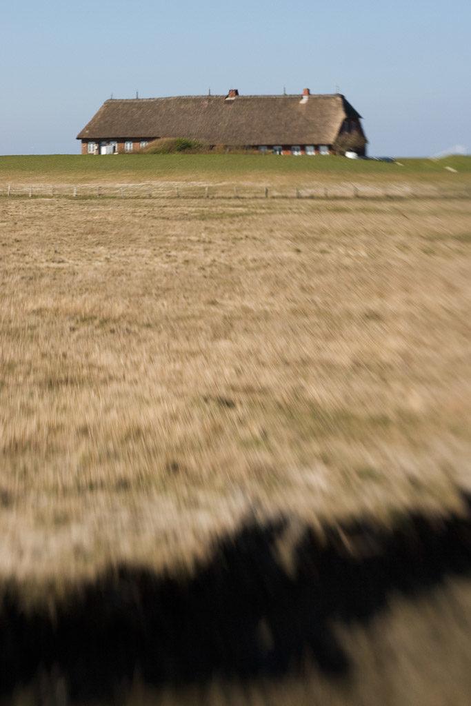 DE, DE-SH, NF, SH, animal, animals, bird, birds, brent geese, brent goose, deutschland, foreshore, fotografie, frühling, gans, geese, germany, goose, groede2007, gröde, gänse, hallig, hallig gröde, halligen, holm, jahreszeit, jahreszeiten, kirchwarft, lensbaby, marshes, meer, nordfriesland, nordsee, north frisia, north sea, photography, phototech, reise, ringelgans, ringelgänse, salt marshes, salzwiesen, schleswig-holstein, sea, seascape, season, seasons, see, spring, tier, tiere, travel, vogel, vögel, wadden, wasser, water, watt, world