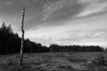 GB, SCO, SCT, UK, barren, baum, birch, birches, birke, birken, blau, blue, braun, brodie castle, brown, bäume, color, colors, dinge, farbe, farben, forres, grampian, great britain, grounds, himmel, jahreszeit, jahreszeiten, landscape, landschaft, moray, pflanzen, plants, pole, reise, rural, schottland, scotland, scotland2007, season, seasons, sky, sommer, summer, things, travel, tree, trees, united kingdom, wald, waldgebiet, week1-brodie, wood, woodland, world, öde