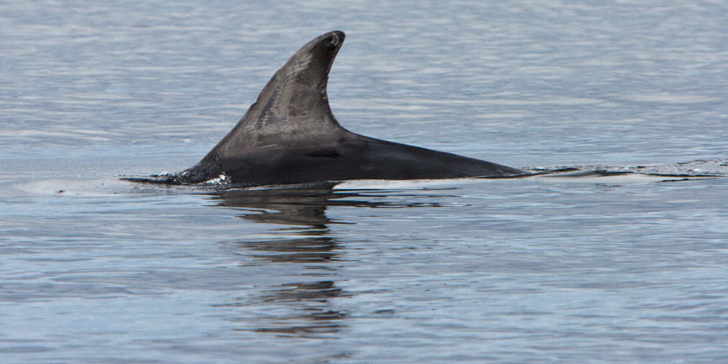 GB, SCO, SCT, UK, animal, animals, beobachten, beobachtung, black isle, chanonry point, delfin, delfine, delphin, delphine, dolphin, dolphins, favs-sb, fortrose, great britain, highland, jahreszeit, jahreszeiten, meer, moray firth, reise, ross and cromarty, schottland, scotland, scotland2007, sea, seascape, season, seasons, see, sommer, summer, tier, tiere, travel, united kingdom, wasser, watching, water, week1-brodie, world