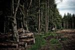 GB, SCO, SCT, UK, baum, braun, brodie castle, brown, bäume, color, colors, düster, farbe, farben, finster, forres, gloomy, grampian, grau, gray, great britain, green, grey, grounds, grün, jahreszeit, jahreszeiten, landscape, landschaft, moray, pflanzen, plants, reise, rural, schottland, scotland, scotland2007, season, seasons, sommer, summer, travel, tree, trees, united kingdom, wald, waldgebiet, week1-brodie, wood, woodland, world