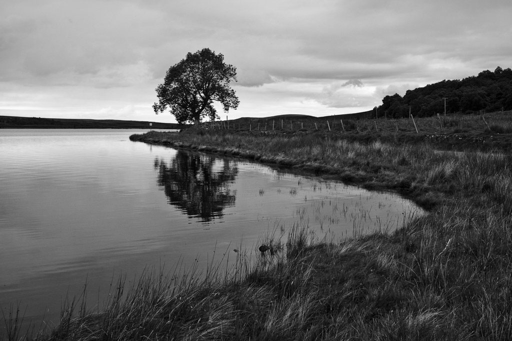 GB, SCO, SCT, UK, b&w, baum, black and white, bw, bäume, favs-sb, fence, fotografie, great britain, highland, inverness-shire, jahreszeit, jahreszeiten, landscape, landschaft, loch, loch indorb, pflanzen, photography, plants, reise, schottland, schwarzweiß, scotland, scotland2007, season, seasons, shore, sommer, summer, sw, travel, tree, trees, united kingdom, wasser, water, week1-brodie, world