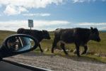 GB, SCO, SCT, UK, animal, animals, assynt, auto, automobil, autos, car, cars, cattle, cow, cows, dinge, fahrzeuge, favs-mj, filter, filter-pol, fotografie, great britain, highland, himmel, jahreszeit, jahreszeiten, kuh, kühe, livestock, mirror, on the road, passing place, photography, phototech, reise, rinder, road, roads, rural, schottland, scotland, scotland2007, season, seasons, sign post, single track, sky, sommer, spiegel, stoer, straße, straßen, summer, sutherland, things, tier, tiere, traffic, travel, united kingdom, unterwegs, vehicles, verkehr, vieh, week2-stoer, world