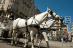 1. stadtbezirk, AT, AT-9, animal, animals, austria, carriage, equid, equidae, equids, fahrzeuge, fiacker, froschperspektive, graben, horse, horses, innenstadt, inner city, innere stadt, kutsche, pferd, pferde, reise, tier, tiere, travel, vehicles, vienna, vienna2008, view from below, wien, wiener innenstadt, world, worms eye, österreich