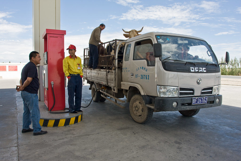 CN, animal, animals, anxi, auto, automobil, autos, car, cars, cattle, china, china2008, cow, cows, fahrzeuge, filling pump, fueling station, gansu, gas pump, gas station, kuh, kühe, leute, livestock, menschen, people, petrol pump, pump, reise, rinder, tankstelle, tier, tiere, transport, travel, vehicles, vieh, world, zapfsäule, zhongguo, 中国, 中國, 甘肃
