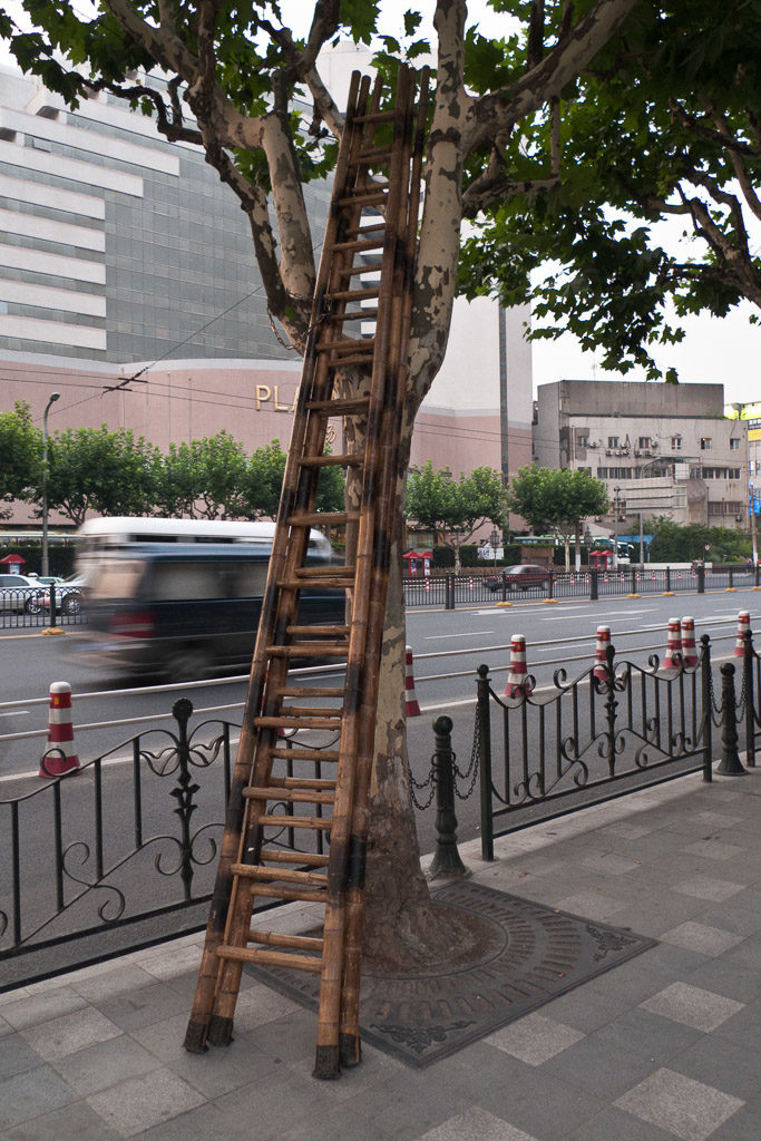 CN, baum, bäume, china, china2009, dinge, ladder, pflanzen, plants, reise, shanghai, straße, straßen, straßenfotografie, street, street photography, streets, things, travel, tree, trees, world, zhongguo, 上海, 中国, 中國
