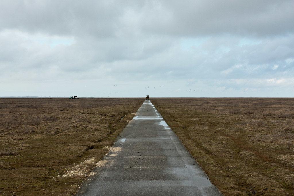 DE, DE-SH, NF, SH, clouds, deutschland, frühling, germany, groede2010, gröde, hallig, hallig gröde, halligen, himmel, holm, horizon, horizont, jahreszeit, jahreszeiten, marshes, nordfriesland, north frisia, reise, road, roads, salt marshes, salzwiesen, schleswig-holstein, season, seasons, sky, spring, straße, straßen, traffic, travel, verkehr, wolken, world