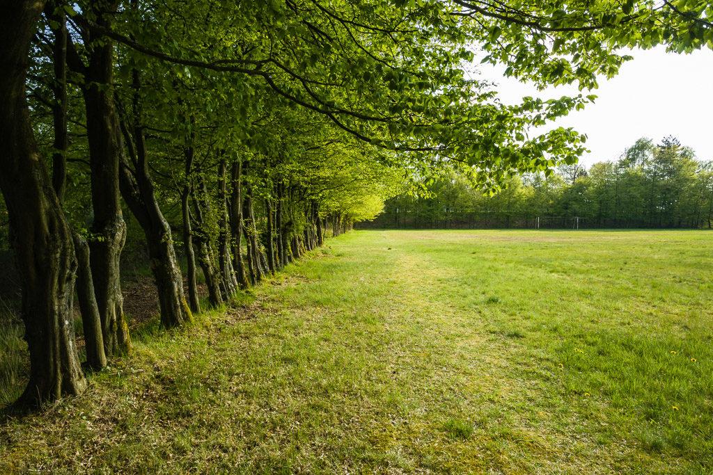 DE, deutschland, eifel, germany, naturpark hohes venn-eifel, nordeifel, rureifel, vogelsang, vogelsang ip, world