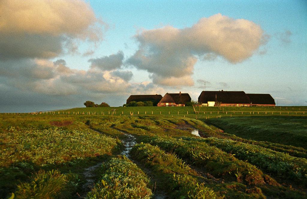 DE, DE-SH, NF, SH, buildings, clouds, deutschland, gebäude, germany, gröde, hallig, hallig gröde, halligen, haus, himmel, holm, house, houses, häuser, knudswarft, morgen, morning, nordfriesland, north frisia, reise, schleswig-holstein, sky, travel, wolken, world