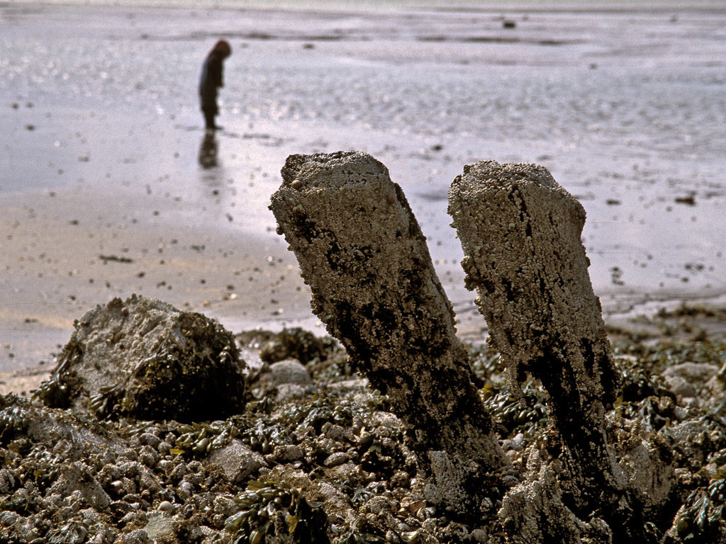 DE, DE-SH, NF, SH, bandik, deutschland, dinge, ebbe, germany, gröde, gröde people, hallig, hallig gröde, halligen, holm, leute, low tide, meer, menschen, mudflat, niedrigwasser, nordfriesland, north frisia, people, pole, reise, schleswig-holstein, sea, seascape, see, things, tidal flat, travel, wasser, water, watt, world