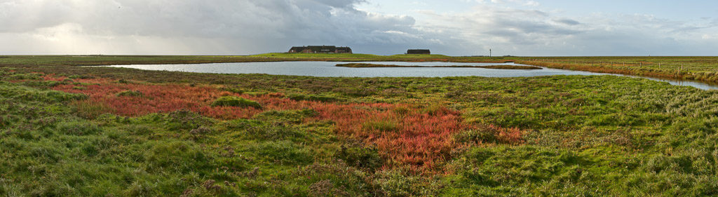 DE, DE-SH, NF, SH, color, colors, deutschland, farbe, farben, fotografie, germany, glasswort, green, gröde, gröde2008, grün, hallig, hallig gröde, halligen, holm, kirchwarft, knudswarft, marshes, nordfriesland, north frisia, panorama, panoramastudio, pflanzen, photography, phototech, plants, queller, red, reise, rot, salt marshes, salzwiesen, schleswig-holstein, travel, world