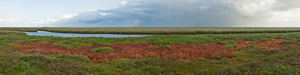 DE, DE-SH, NF, SH, color, colors, deutschland, farbe, farben, fotografie, germany, glasswort, green, gröde, gröde2008, grün, hallig, hallig gröde, halligen, holm, marshes, nordfriesland, north frisia, panorama, panoramastudio, pflanzen, photography, phototech, plants, queller, red, reise, rot, salt marshes, salzwiesen, schleswig-holstein, travel, world