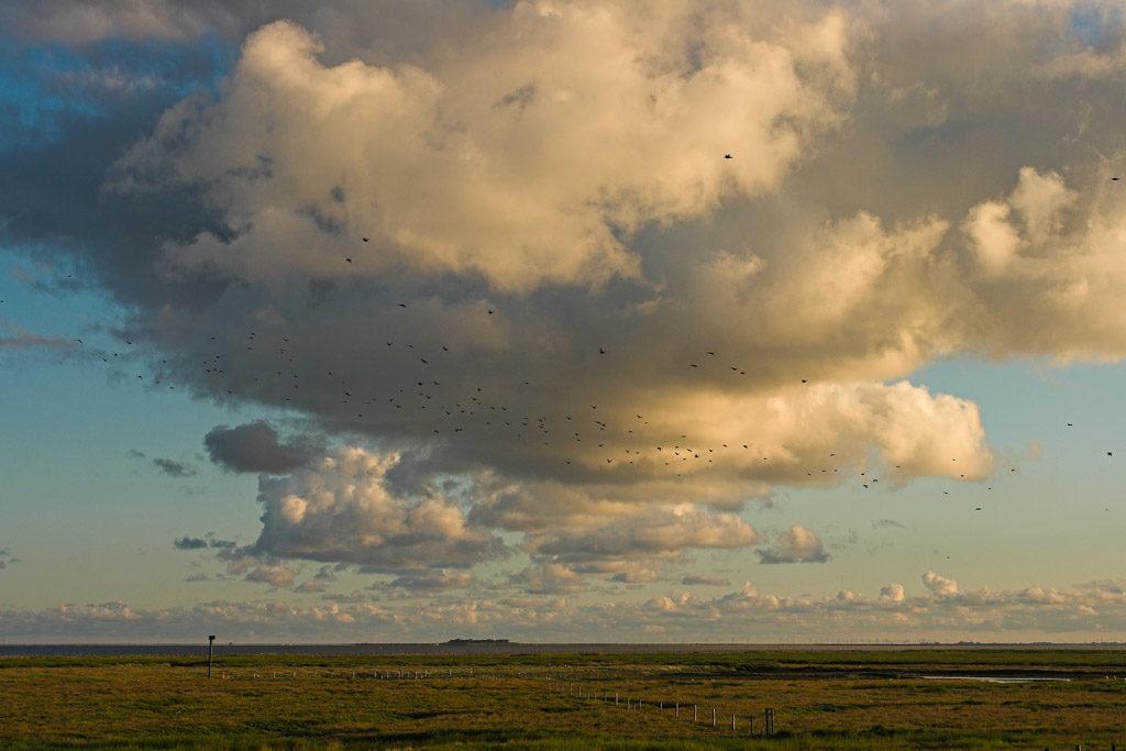 DE, DE-SH, NF, SH, animal, animals, bird, birds, clouds, deutschland, germany, gröde, hallig, hallig gröde, halligen, himmel, holm, jahreszeit, jahreszeiten, landscape, landschaft, marshes, natur, nature, nordfriesland, nordsee, north frisia, north sea, reise, rural, salt marshes, salzwiesen, schleswig-holstein, season, seasons, sky, sommer, sonne, sonnenaufgang, summer, sun, sunrise, tier, tiere, travel, vogel, vögel, wadden sea, wattenmeer, wolken, world