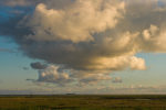 DE, DE-SH, NF, SH, animal, animals, bird, birds, clouds, deutschland, germany, gröde, hallig, hallig gröde, halligen, himmel, holm, jahreszeit, jahreszeiten, landscape, landschaft, marshes, natur, nature, nordfriesland, nordsee, north frisia, north sea, reise, rural, salt marshes, salzwiesen, schleswig-holstein, season, seasons, sky, sommer, sonne, sonnenaufgang, summer, sun, sunrise, tier, tiere, travel, vogel, vögel, wadden sea, wattenmeer, wolken, world