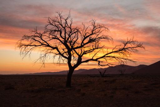 NA, by-jenny, dune, dune 45, dunes, düne, dünen, hardap, landscape, landschaft, namibia, sonne, sonnenuntergang, sossusvlei, sun, sunset, world