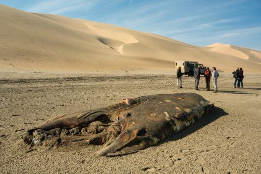 L-std-3:2-height, NA, dune, dunes, düne, dünen, erongo, landscape, landschaft, namibia, sandwich harbour, walfischbay, walvis bay, world
