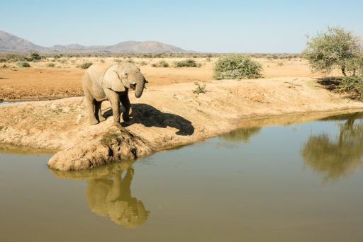 NA, african elephant, afrikanischer elefant, animal, animals, elefant, elefanten, elephant, elephants, erindi, erindi private game reserve, erongo, namibia, old traders lodge, tier, tiere, watering hole, world