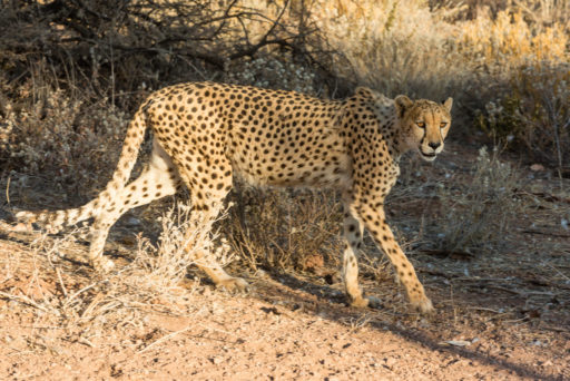 L-std-3:2-height, NA, mount etjo safari lodge, namibia, otjozondjupa, world