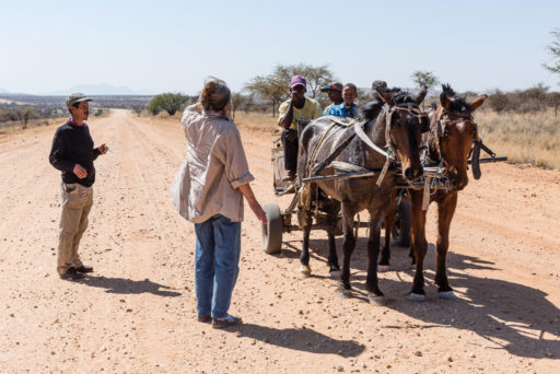 NA, animal, animals, c26, equid, equidae, equids, freunde, friends, horse, horses, khomas, leute, menschen, namibia, people, people at hakos, pferd, pferde, roads of namibia, straßen in namibia, tier, tiere, waltraud, waltraud eppelmann, world