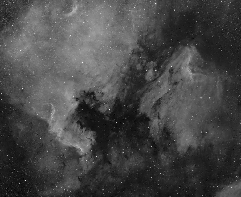 astrofotografie, astronomie, astronomy, astrophotography, b&w, black and white, bw, cygnus, emission nebula, emissionsnebel, fotografie, photography, schwan, schwarzweiß, sw